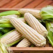 Bonnie Silver Queen Corn
